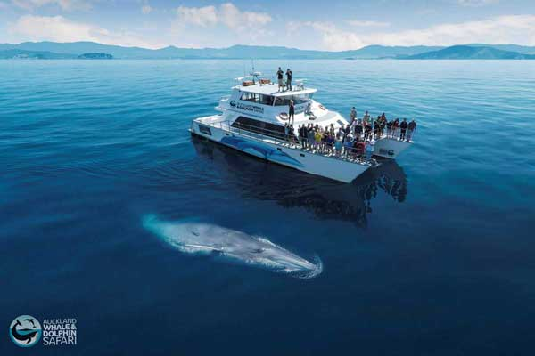 14 Day North Island Family Holiday Package