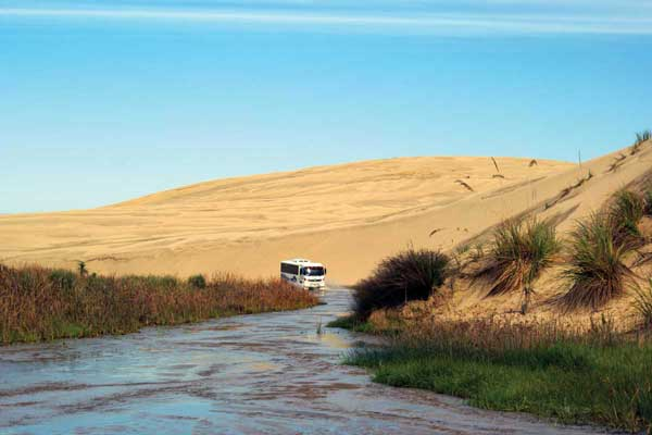 Dune Rider | Explore NZ