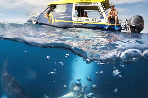 Glass Bottom Boat Whitianga