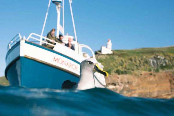 Monarch Wildlife Cruises & Tours
